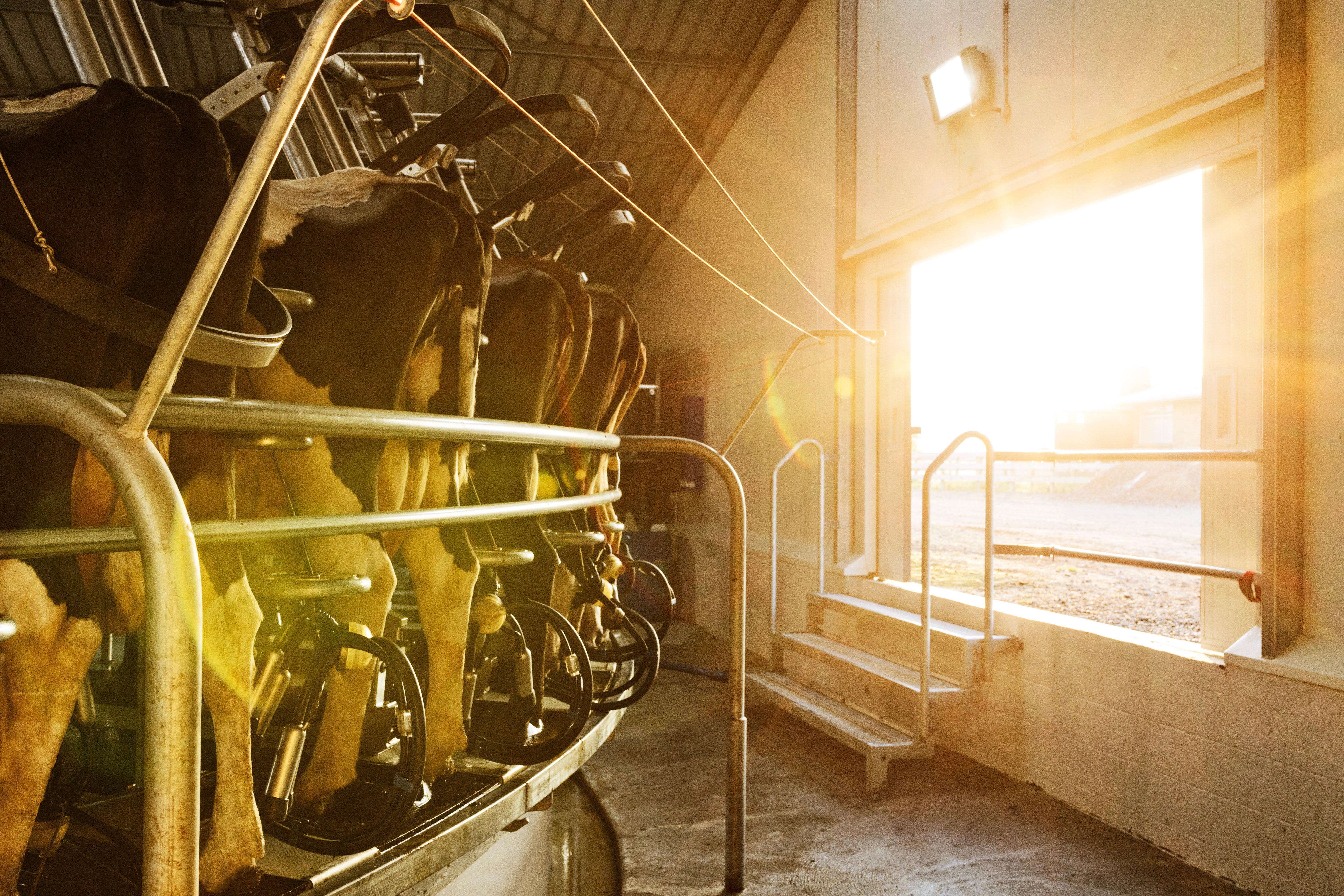 Sunrise through milking shed door